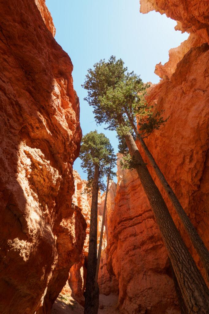 Bryce Canyon Nationalpark - Aufstieg durch die Hoodoos der Wall Street
