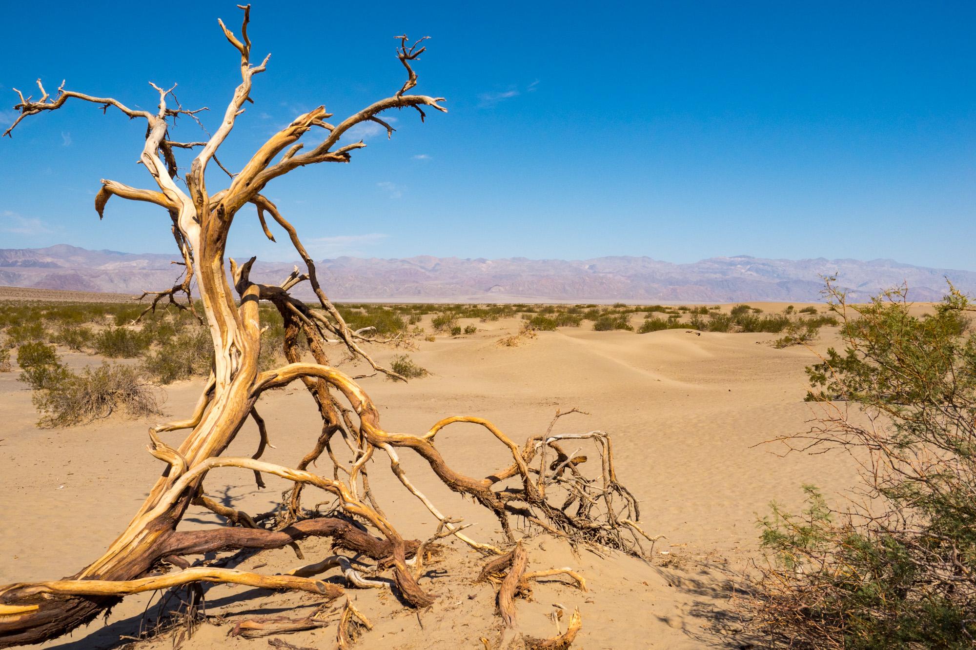 Death Valley Nationalpark - Mesquites Sanddünen