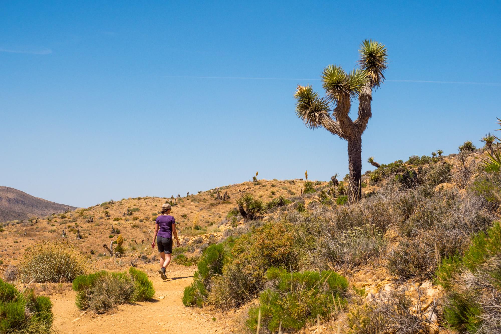 Joshua Tree Nationalpark - Wanderung zur Lost Horse Mine