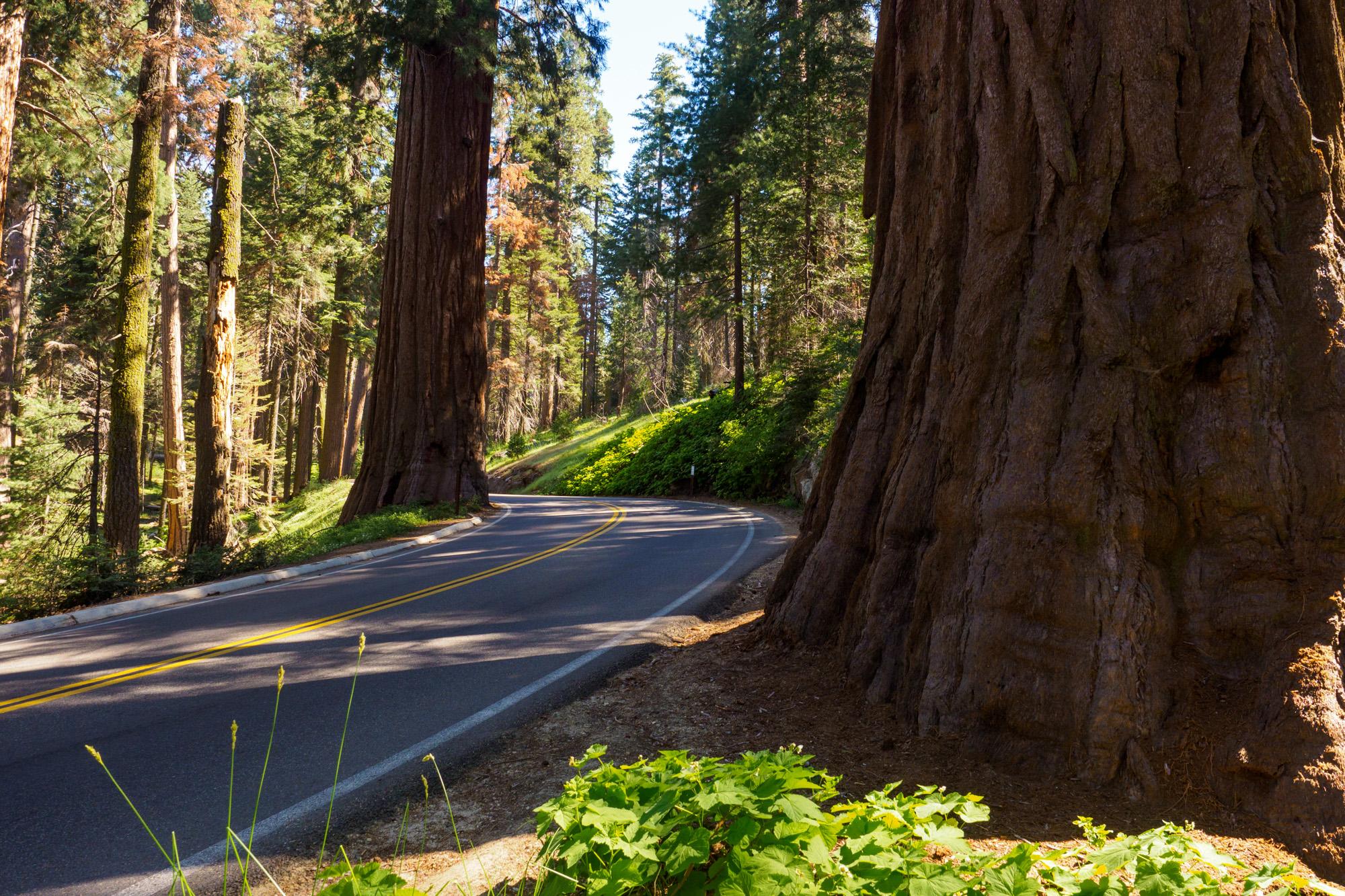 Sequoia Nationalpark - Strasse im Sequoia Nationalpark