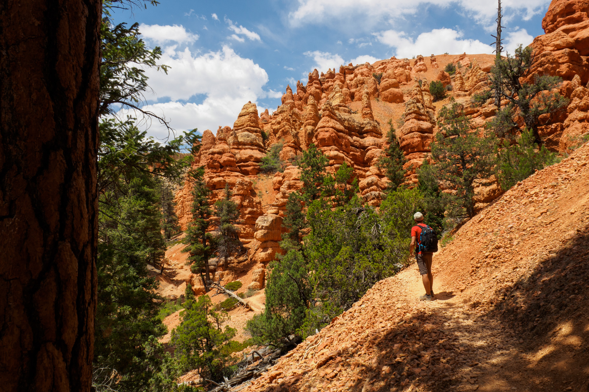 Red Canyon - Pink Ledges Trail