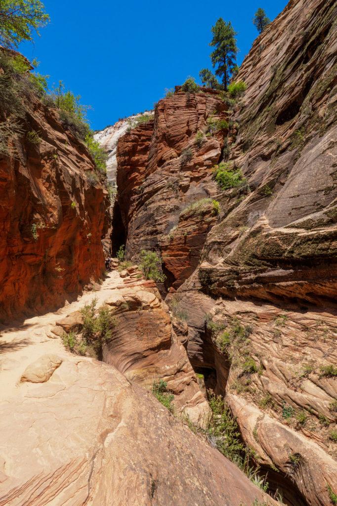 Zion Nationalpark - Im Echo Canyon beim Aufstieg zum Observation Point