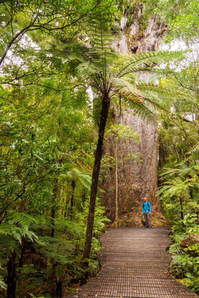 Northlands - Waipoua Forest