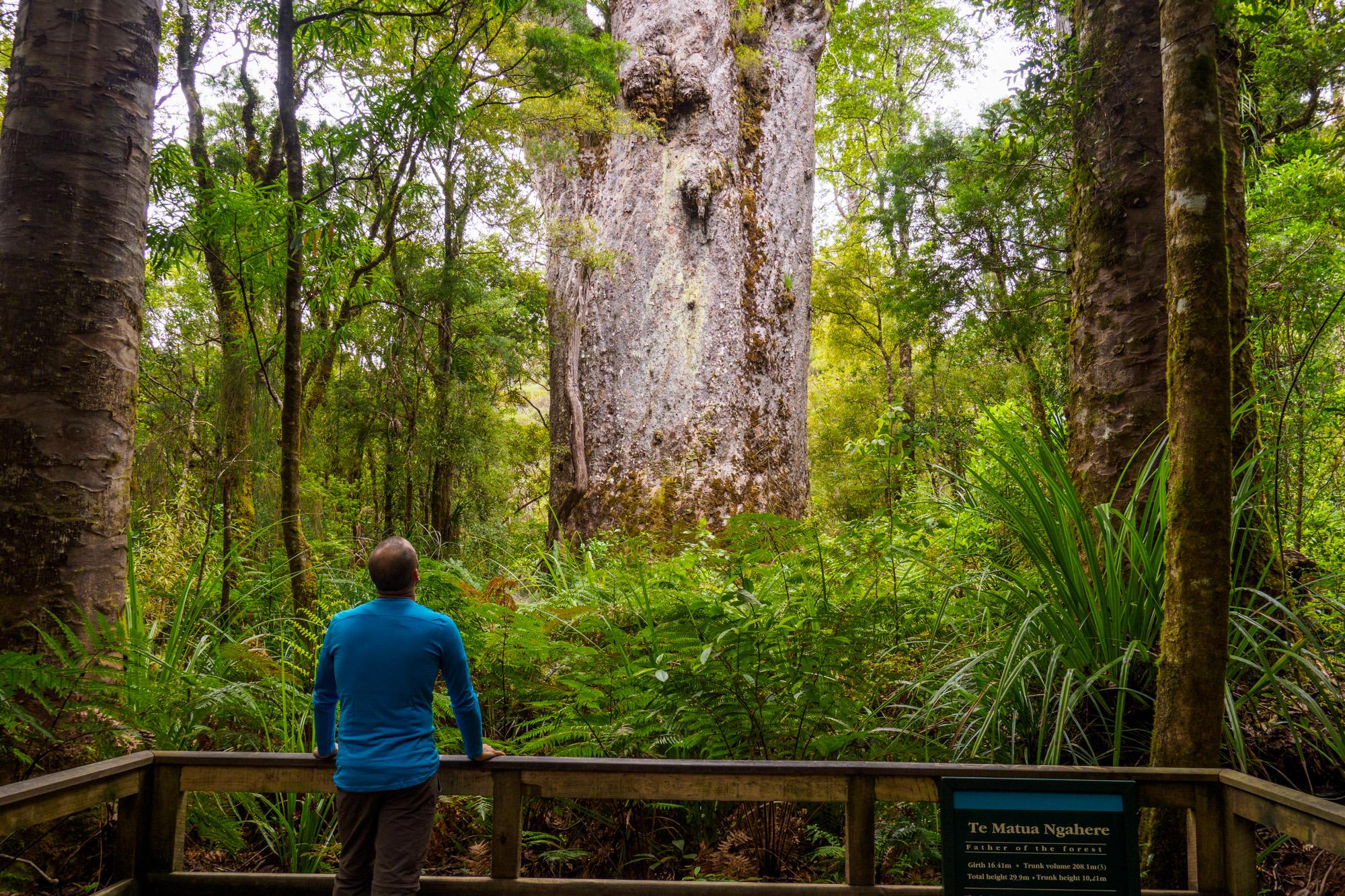 Northlands - Te Matua Ngahere im Waipoua Forest