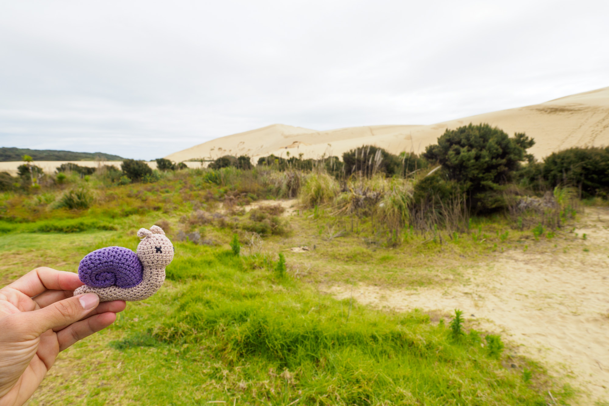 Northlands - Abby bei den Te Paki Dunes