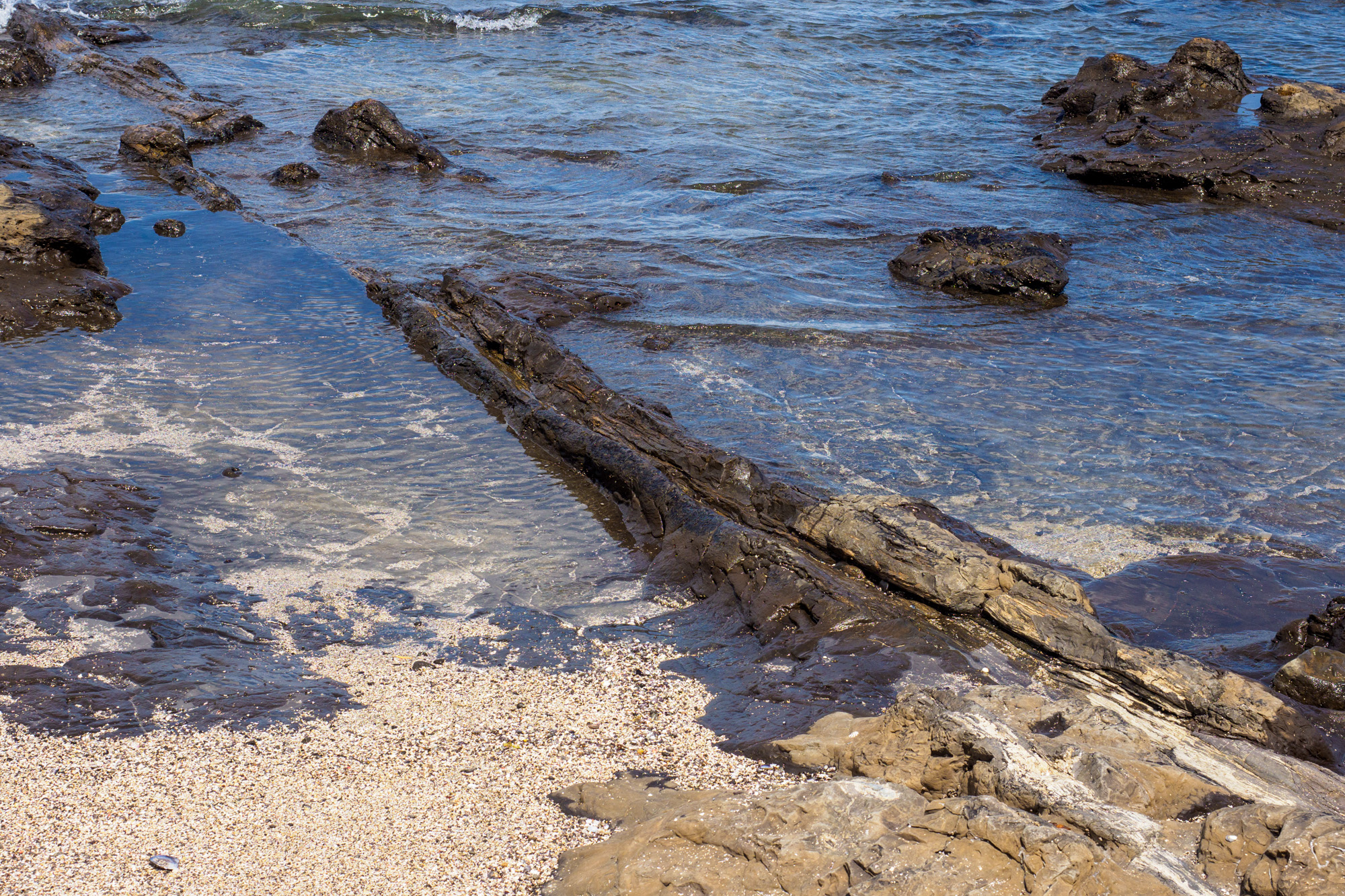 Catlins - Petrified Forest in der Curio Bay