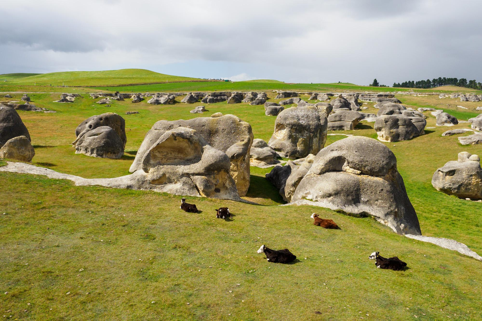 Aoraki Mt Cook Nationalpark - Elephant Rocks