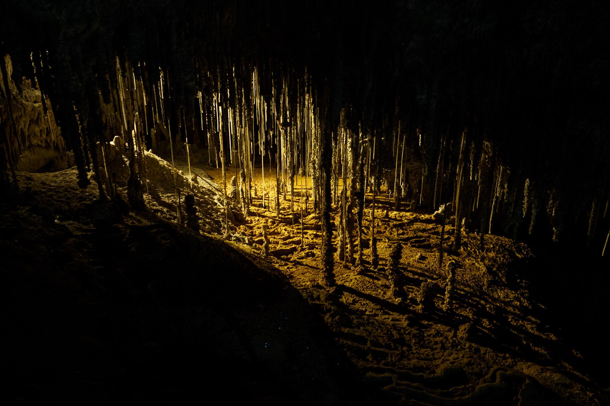 Great Western Tiers - The Garden in der Marakoopa Cave