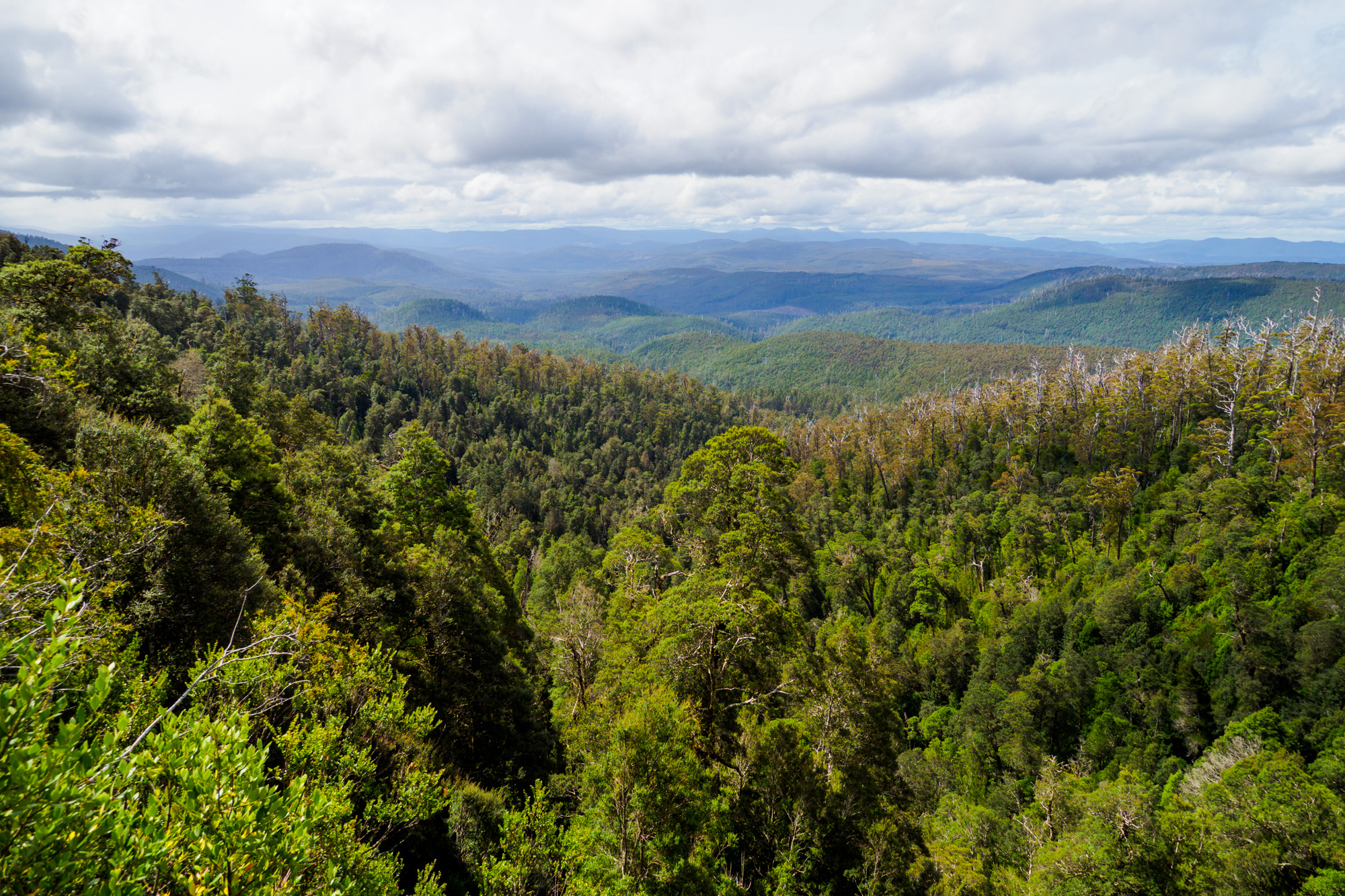 Hartz Mountain Nationalpark - Aussicht vom Waratah Lookout