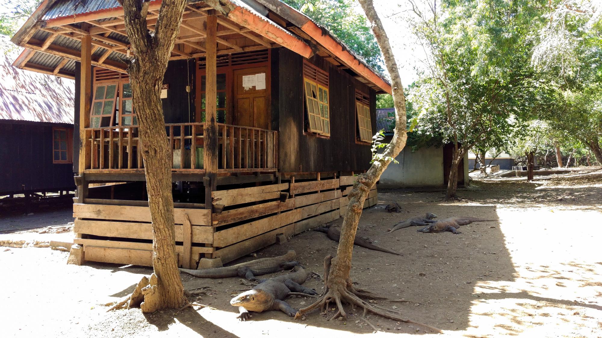 Komodo Nationalpark - Warane bei der Küche