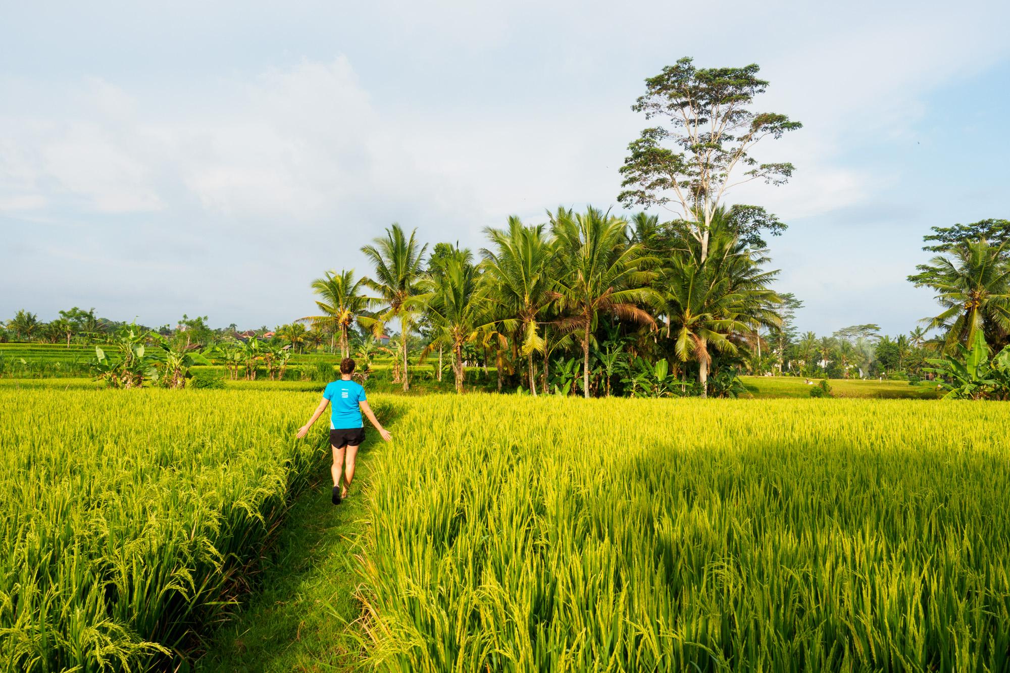 Ubud - Ausflug in die Penestanan Rice Terraces