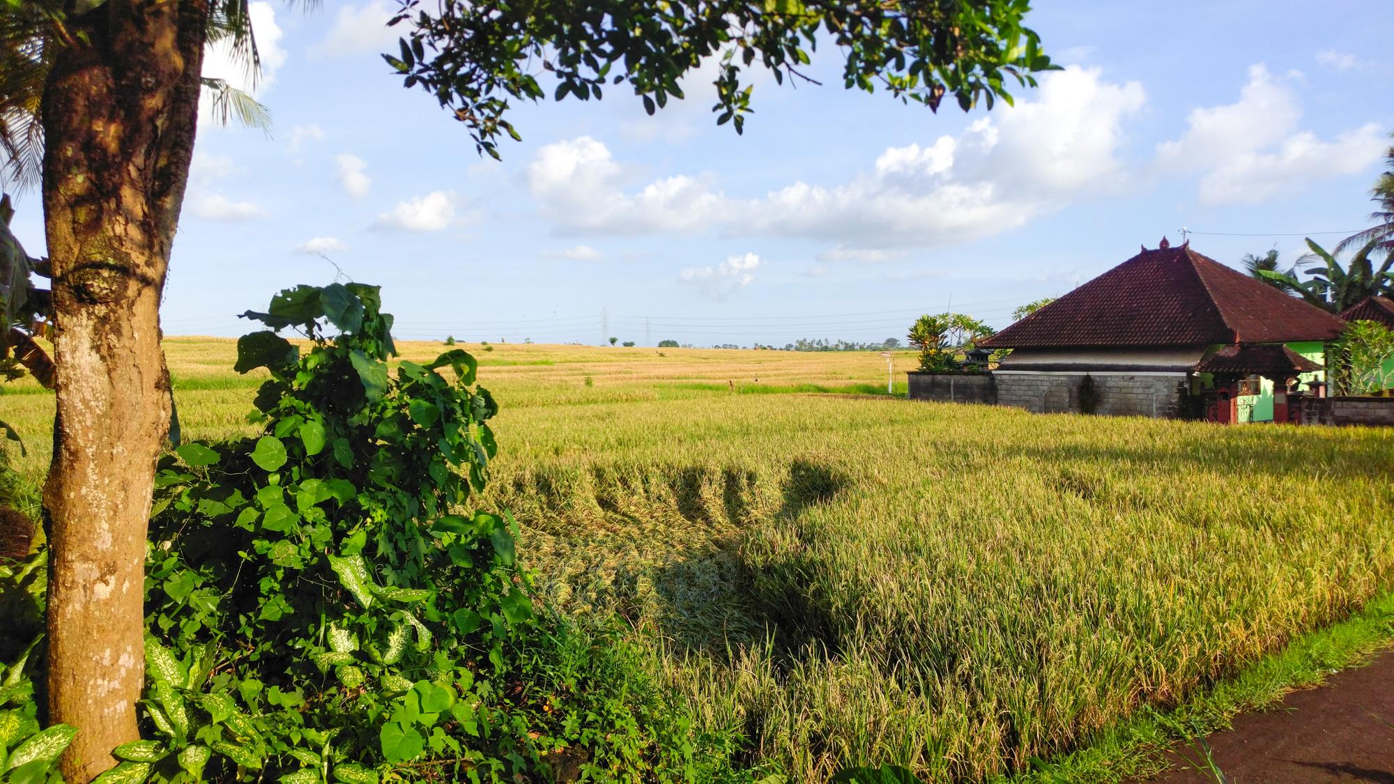 Denpasar - Reisfelder auf Bali